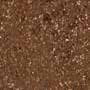 505 Brown